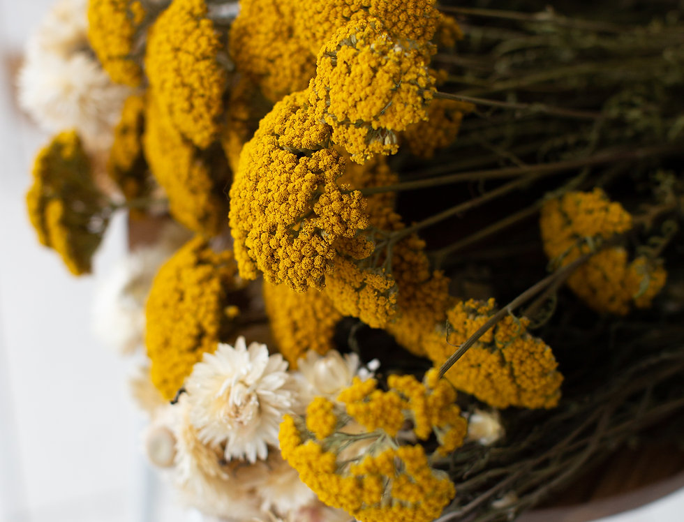 Achillea Single Stems
