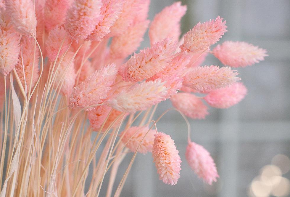 20 x Dried pink phalaris stems