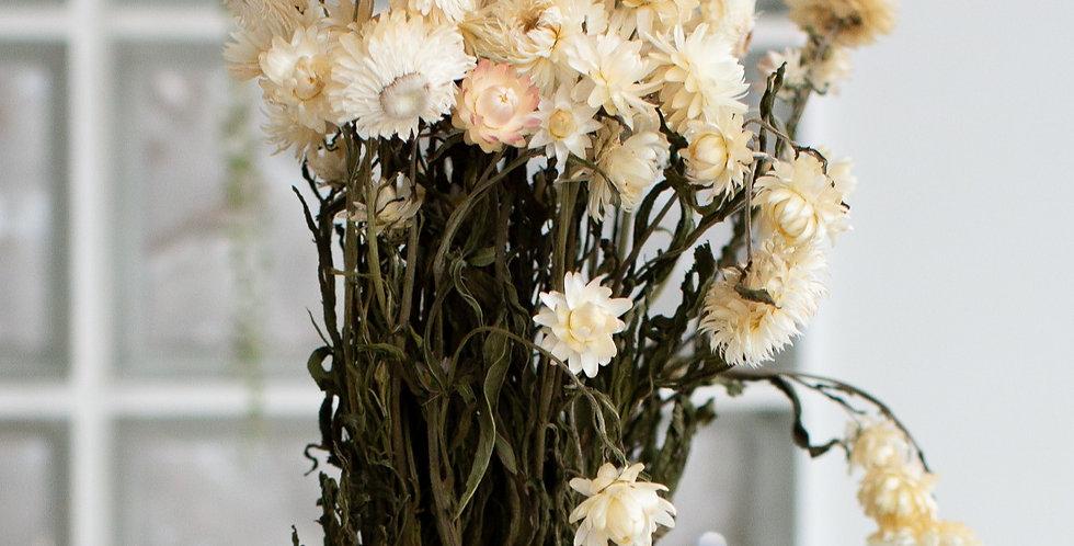 Dried Helichrysum stems