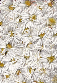 Springtime website template imagery