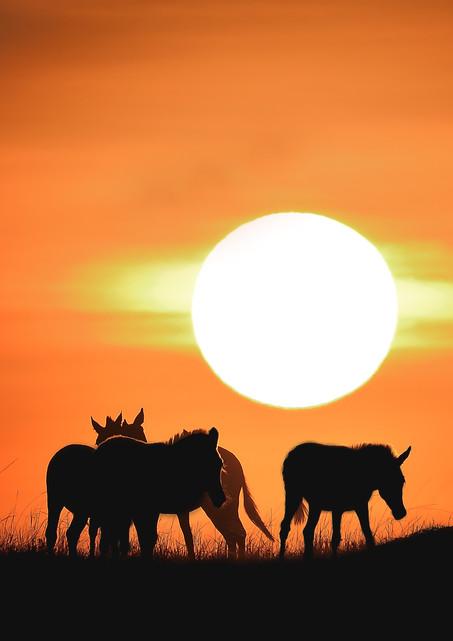 Kenya Massai Mara 2018