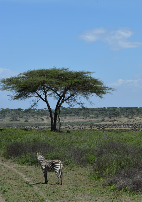 Tanzanie 2014