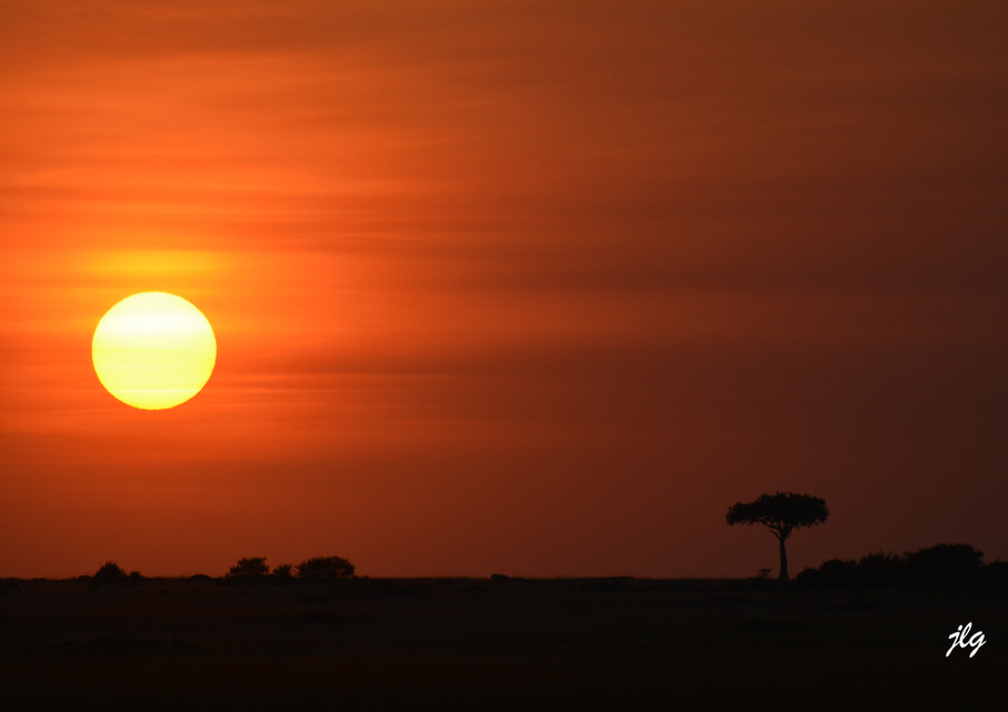 Kenya Massai Mara 2016
