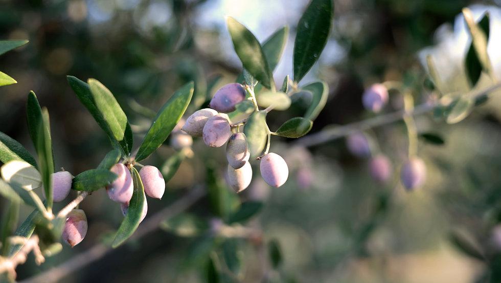 Olives-11201.jpg