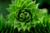 blurred-background-botanical-cacti-95319