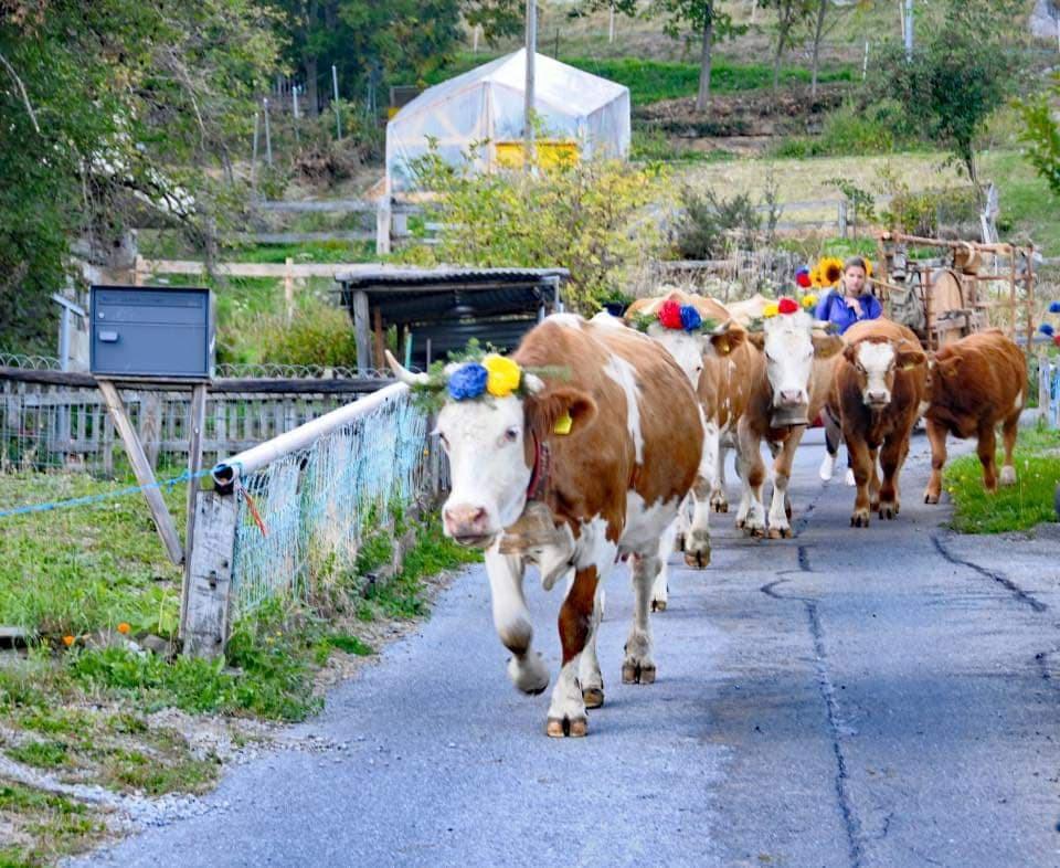 Les 45 ans du jumelage entre Saint-Alban-les-Eaux et Mex célébrés en Suisse