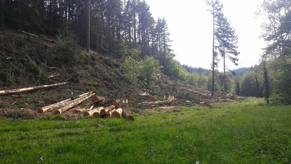 Saint-Alban-les-Eaux : Déboiser pour mieux gérer