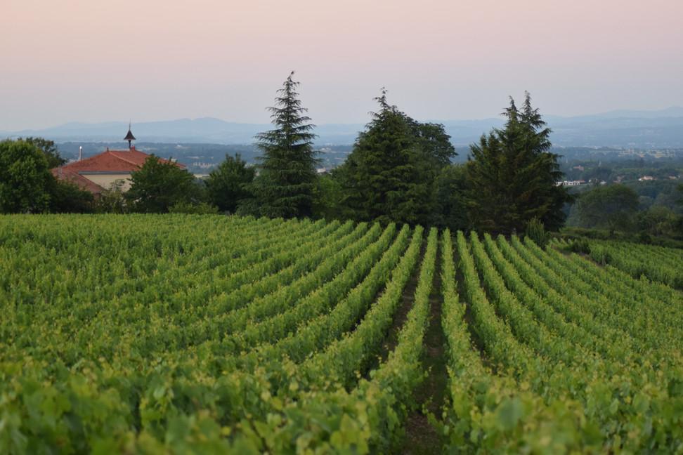 La Côte Roannaise : une Terre et des Vins
