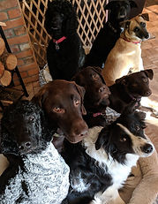 The Come Over Rover Doggy Daycare Crew