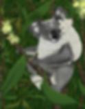 small koala 3 fundraiser.png