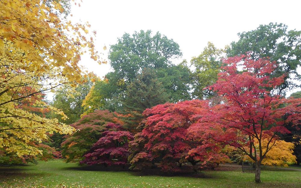 Westonbirt Arboretum - a great day-trip from Bath