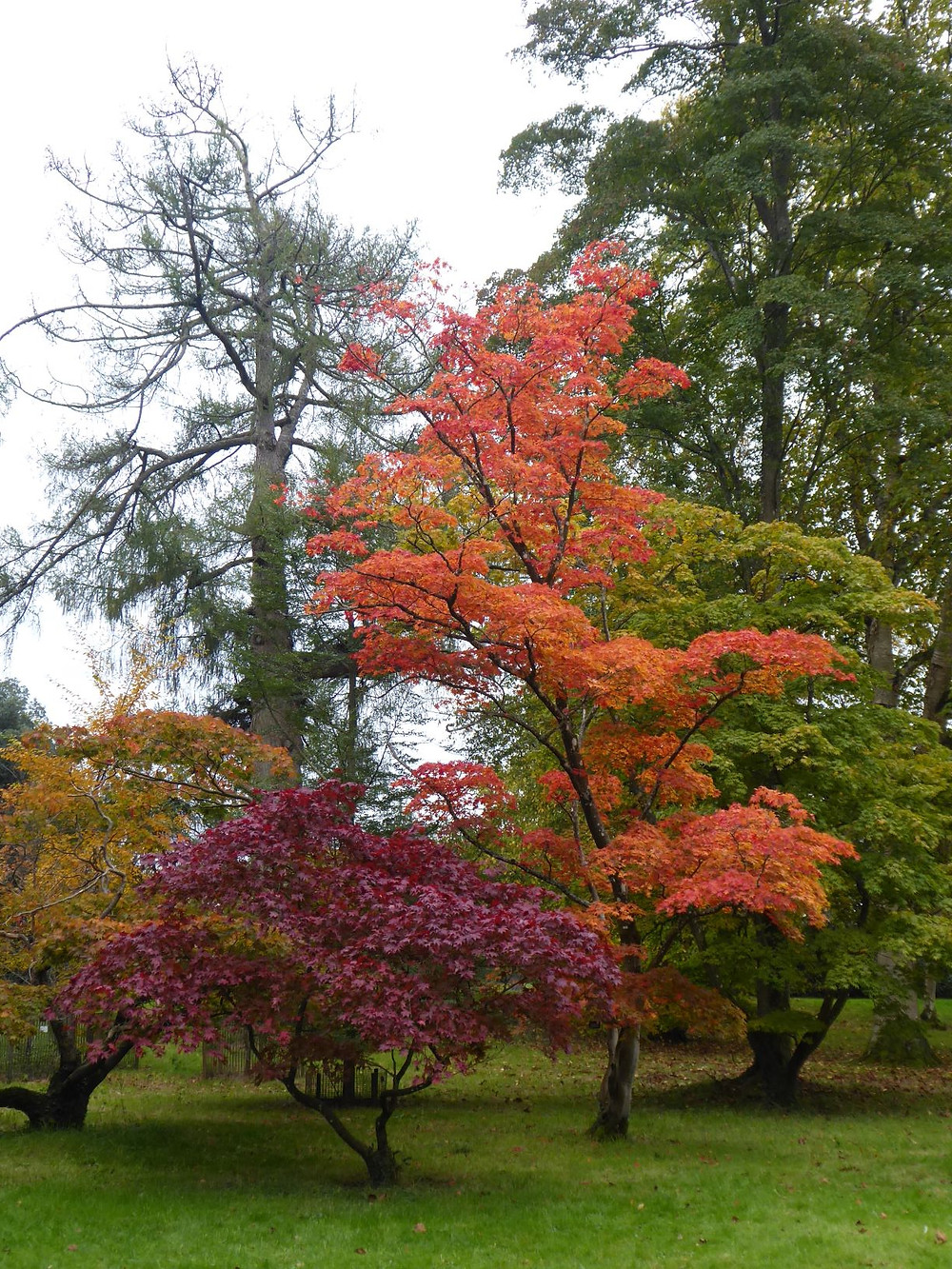 Trees at Westonbirt - tour from Bath