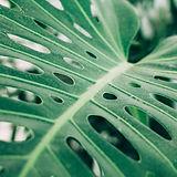Tropisches Palmblatt