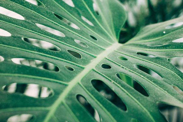 Tropical Palm Leaf