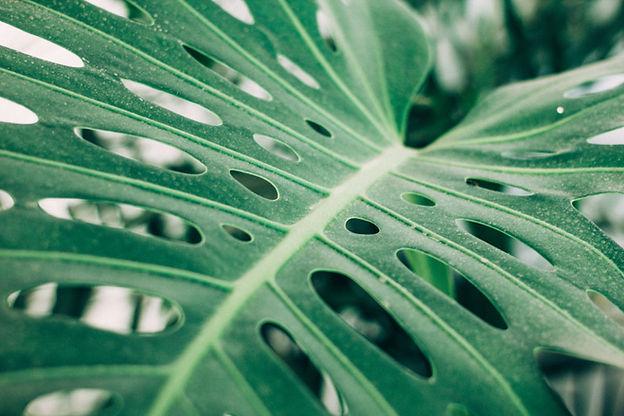 Тропический палм-лист