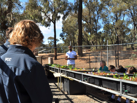 Urban Green Farms and MainStream Aquaculture partner to provide Aquaponics for Aussie Schools.