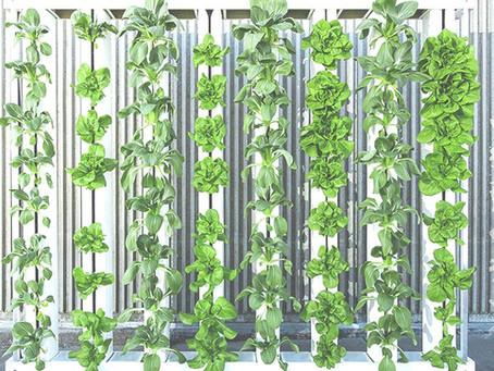 Why Vertical Farming?