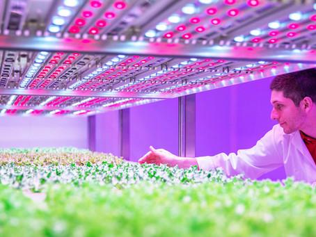 Best Lighting for Vertical Farming & Home Gardens