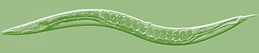 worm 15.png