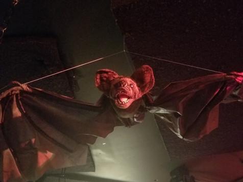 A House Bat