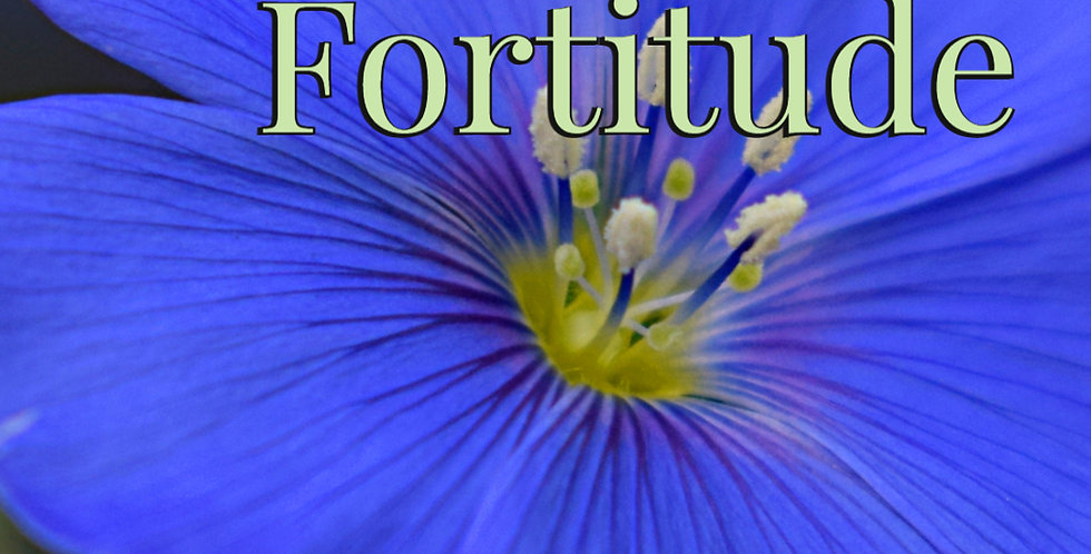 Intestinal Fortitude - The Yorkton Series - Book #4 - eBook