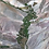 Thumbnail: Pisco CAPEL MOAI RESERVADO 40°/Chili