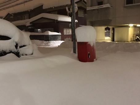 今年の雪事情