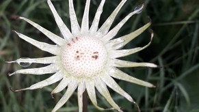 De Fleur à Soleil