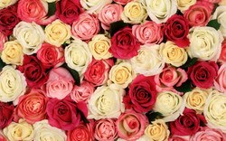 rose-day-2015.jpg