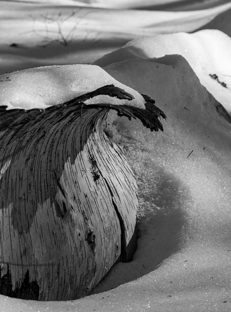 Susan Smith - Winter Wave.jpg