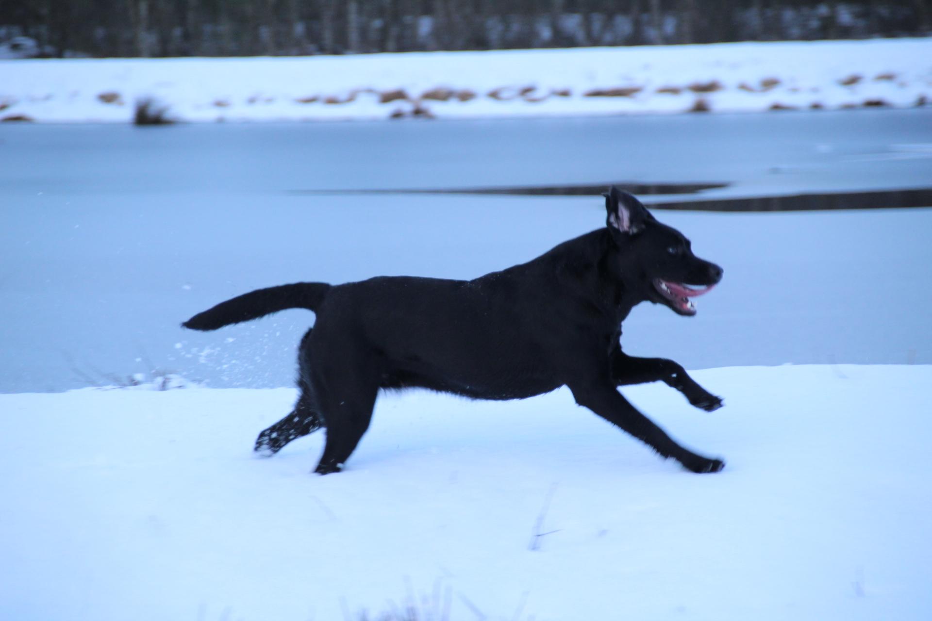 Lola wird in Nordhorn zur Jagd gehen