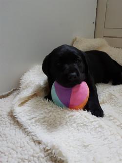 Mein Ball...