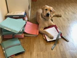 Emil wird das Notariat organisieren