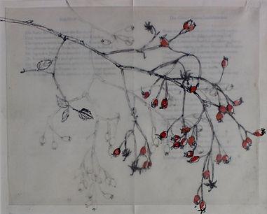 Hagebutten-Rose,-2019,-Papier,-Miexed-Me