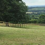 Equestrian Image.JPG