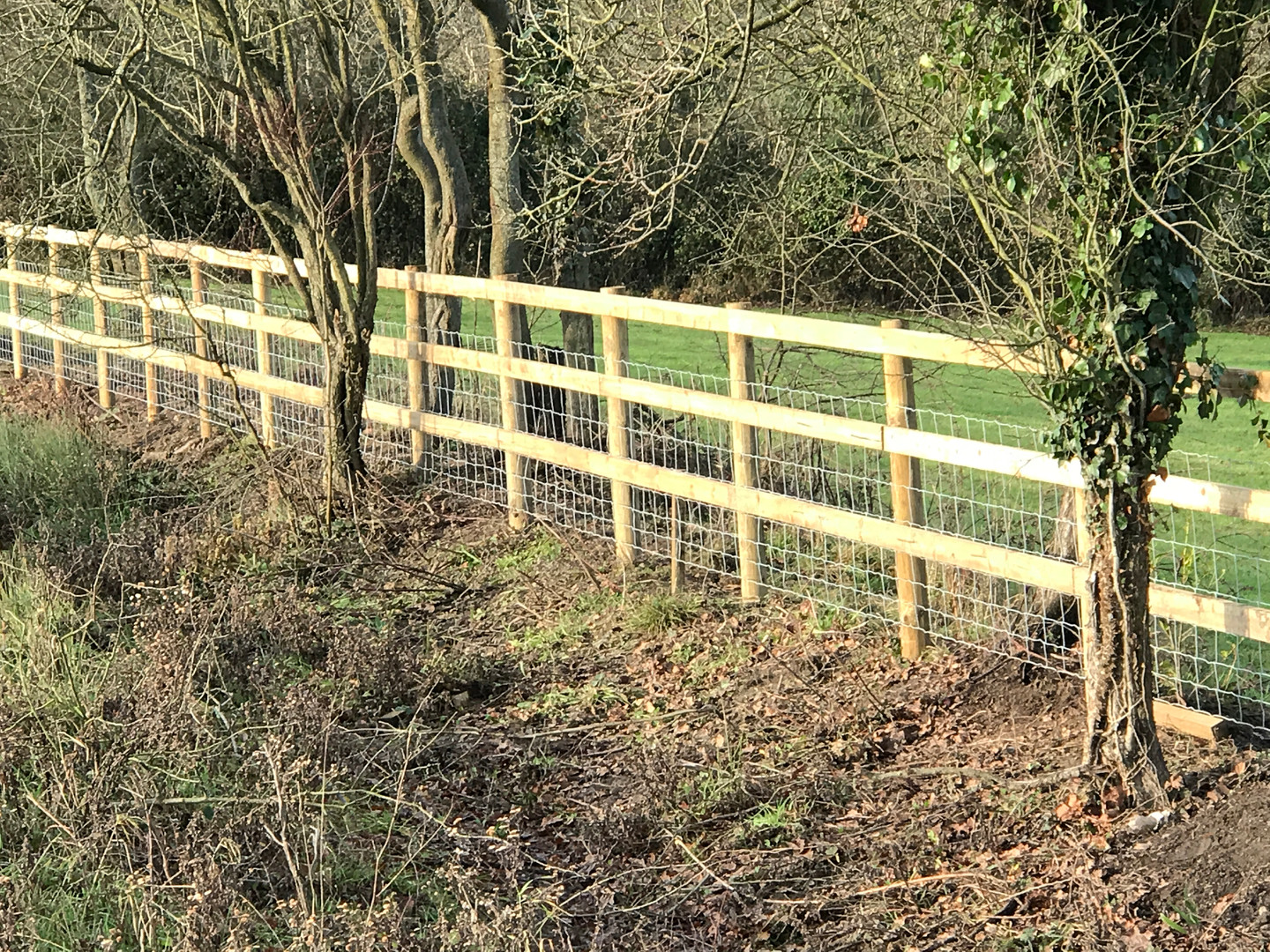 equestrian and livestock fence