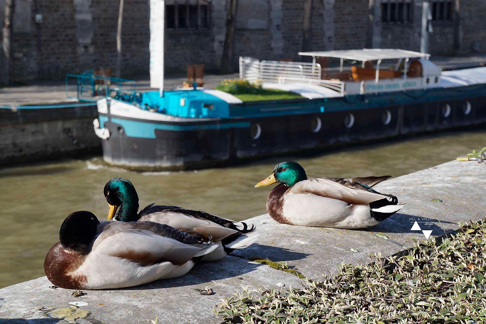 a boat and three French ducks - along the Seine