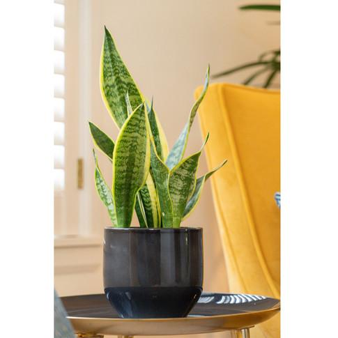 master suite - foliage