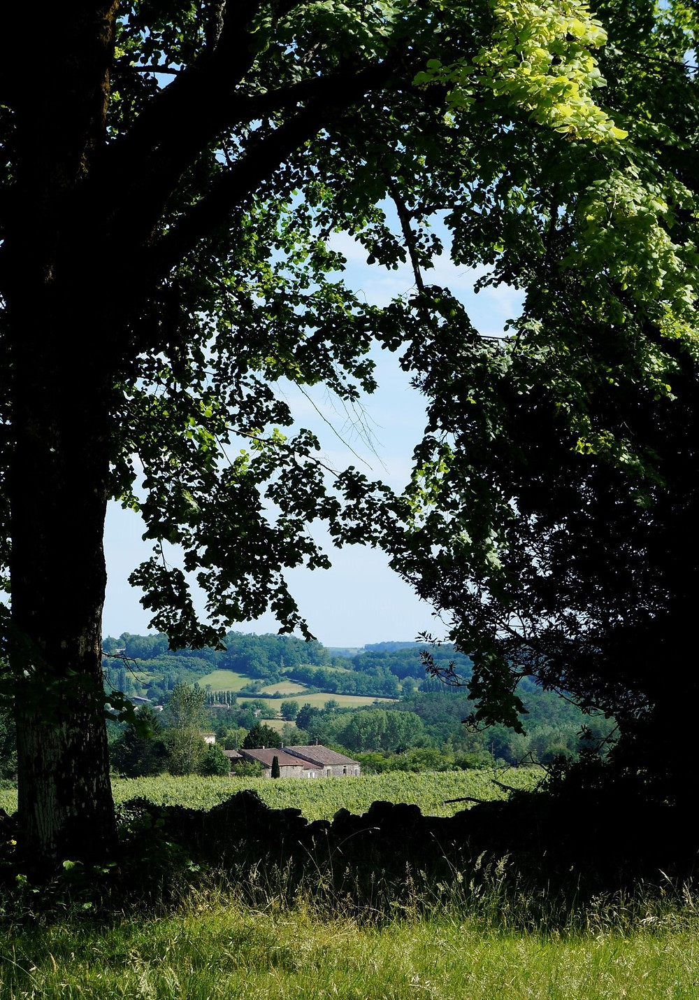 this pastoral landscape is part of the property of a chateau and vineyard in south western France