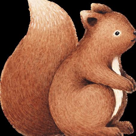 Agnès, L'écureuil