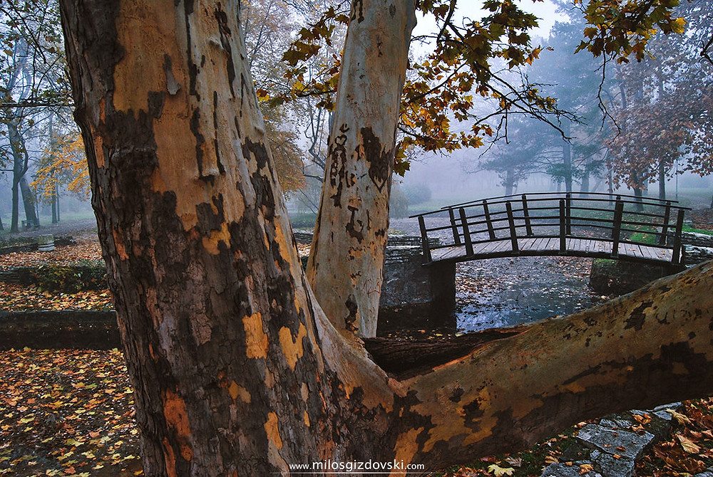 milos-gizdovski-topciderski-park-most