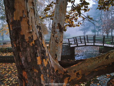 Kako da napravite interesantne jesenje fotke?
