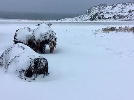 Barr'd Islands, Winter 2018.jpg