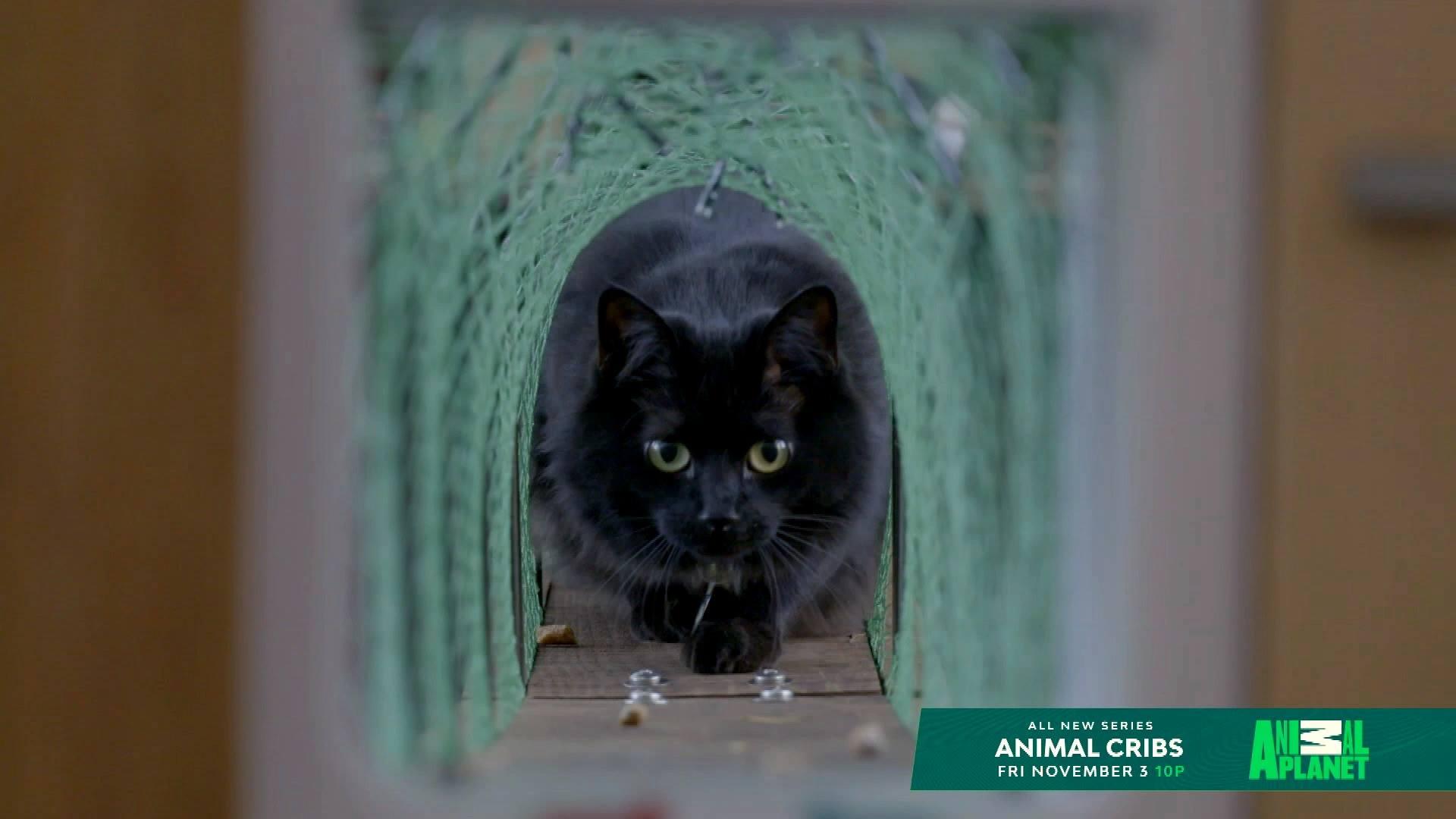 Surecrete on Animal Planet!