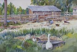 Geese at Love's Barnyard