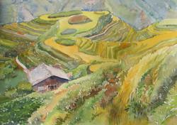 Rice Fields on Mountain Tops