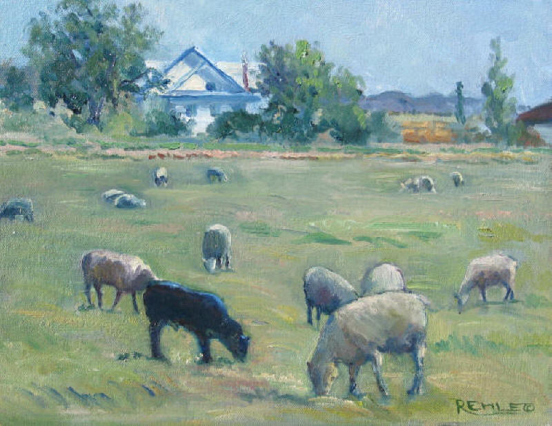 One Black Sheep