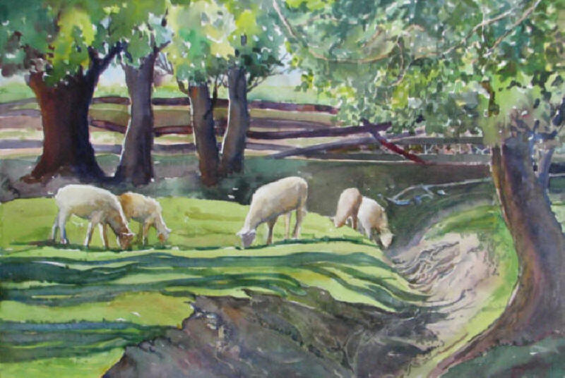 Sheep at Loves Barnyard