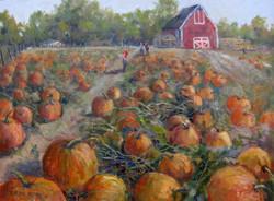 Pumpkins with Barn