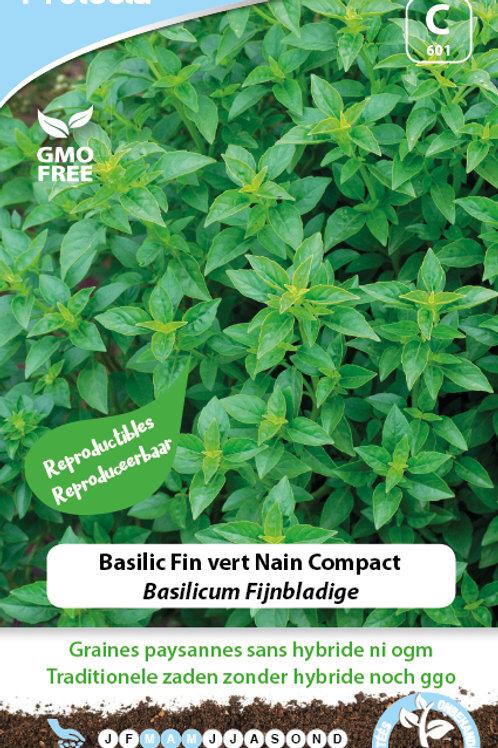 Protecta Basilic fin vert nain compact